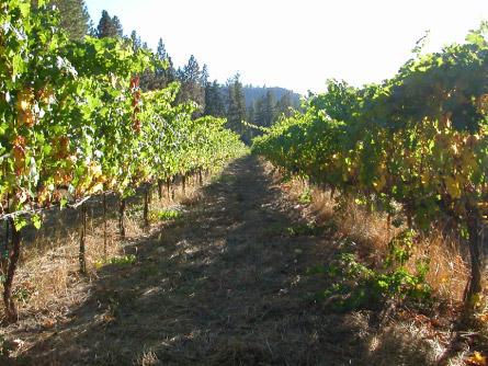 Cabot Vineyards from the Klamath River of Humboldt County
